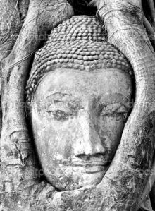 Buddha: Entangled by Roots