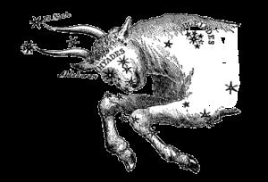 taurus-the-bull